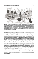 Сторінка 17