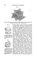 Сторінка 20