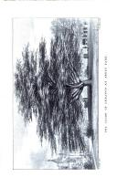 Сторінка 313
