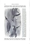Сторінка 94